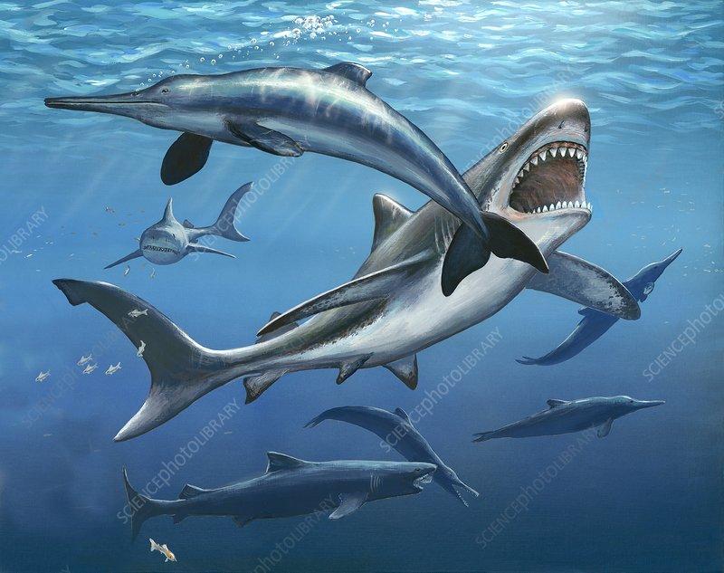 Megalodon prehistoric shark, artwork - Stock Image - C020
