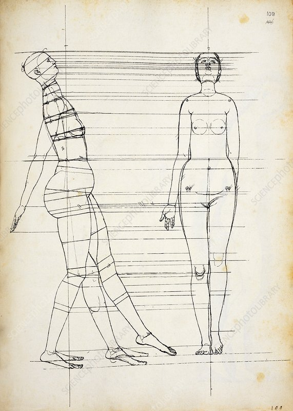 Study In Human Proportions By Durer Stock Image C030 0599 Science Photo Library