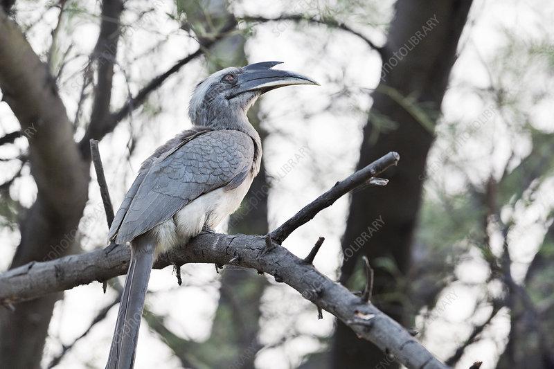 Jharkhand - Dalma Wildlife Sanctuary