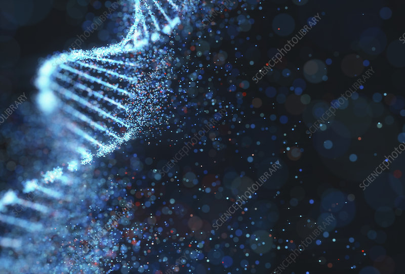 Dna Molecule Illustration Stock Image F027 4410 Science Photo Library