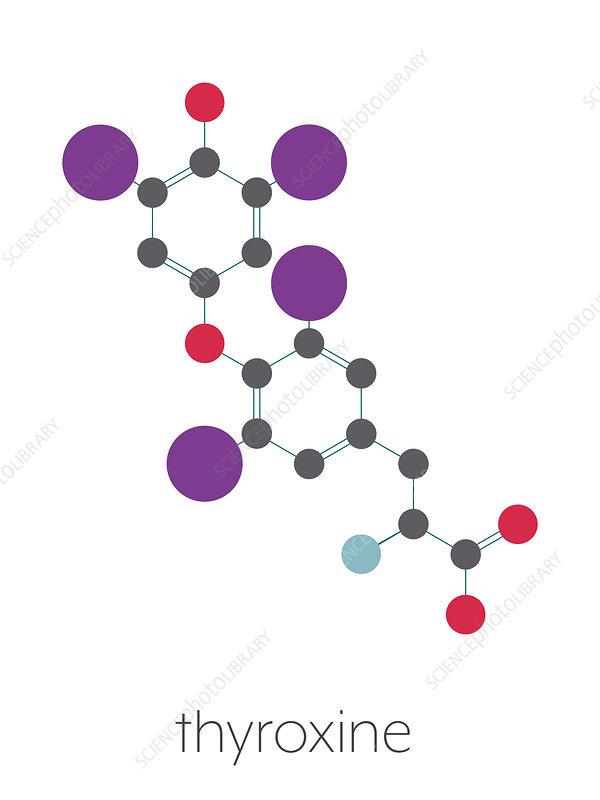Thyroxine Thyroid Hormone Molecule Illustration Stock Image