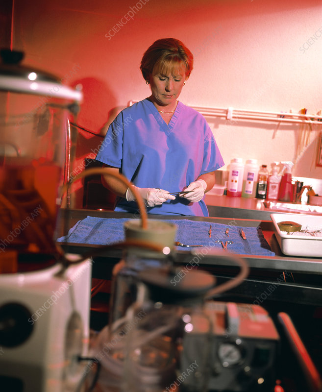 Forensic Pathology Laboratory Stock Image H200 0102 Science Photo Library