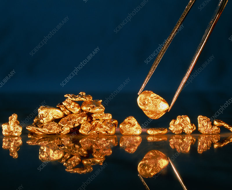 Gold nugget held in tweezers