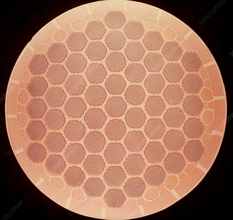 Transverse section of superconductor
