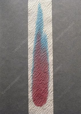 Paper chromatogram of red food colouring