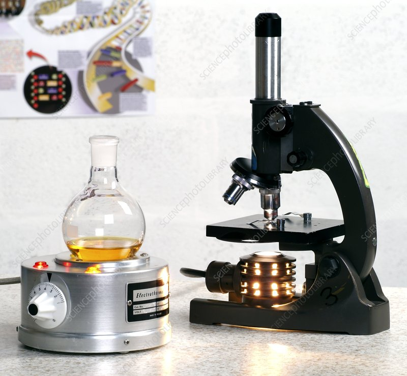Heating mantle and light microscope