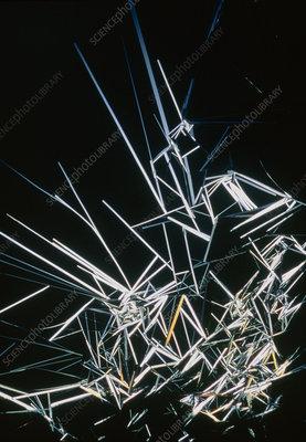 Mannitol crystals