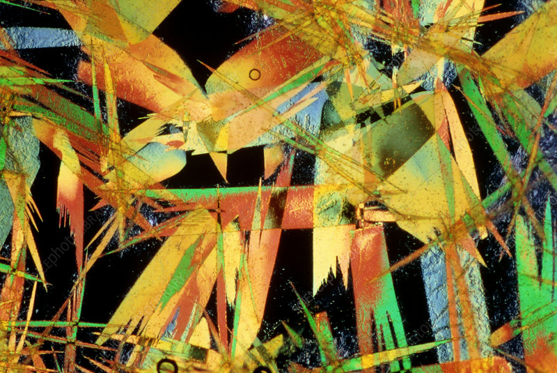 Light micrograph of picric acid crystals