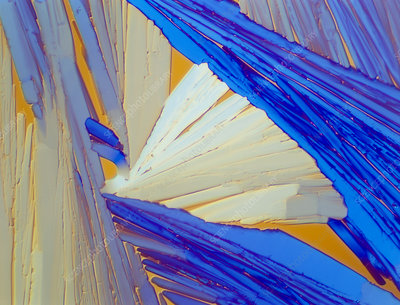 Polarised LM of acenaphthene crystals