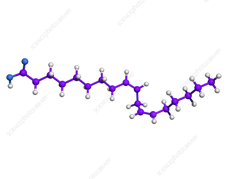 Evening primrose oil molecule