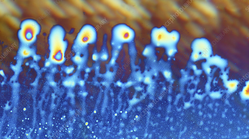 Oils in a perfume, light micrograph
