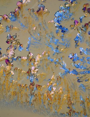 Arginine crystals, light micrograph