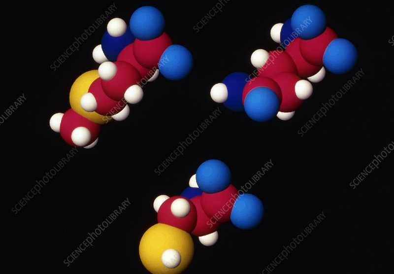 Three different amino acid molecules