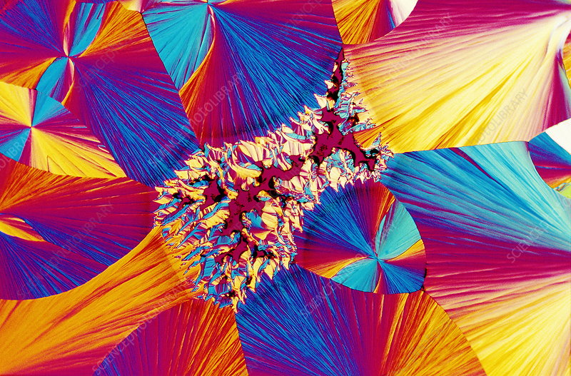 Prostaglandin crystals, light micrograph