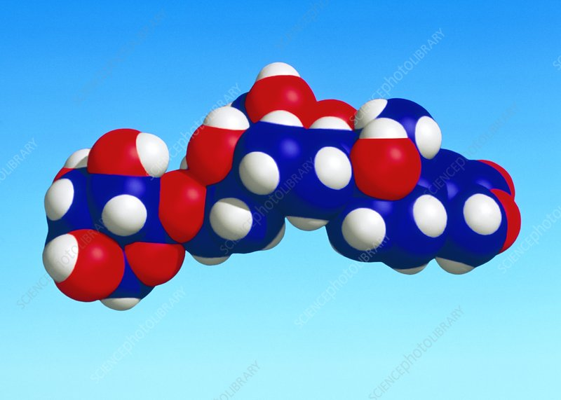 Molecular model of the hormone, Ouabain