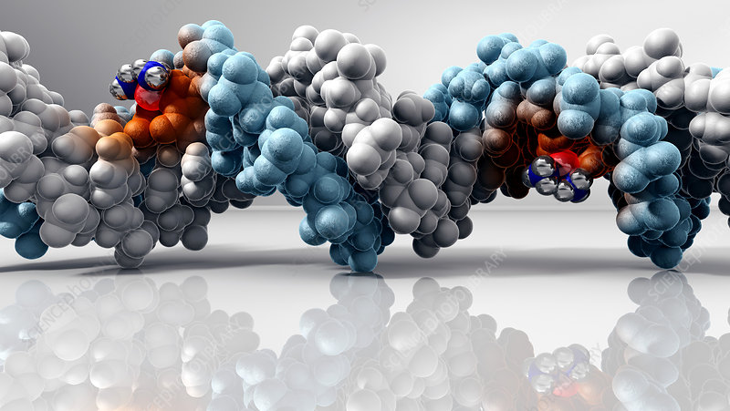Cisplatin cancer drug and DNA molecule