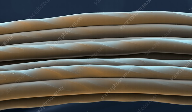 Elastane fibres, SEM
