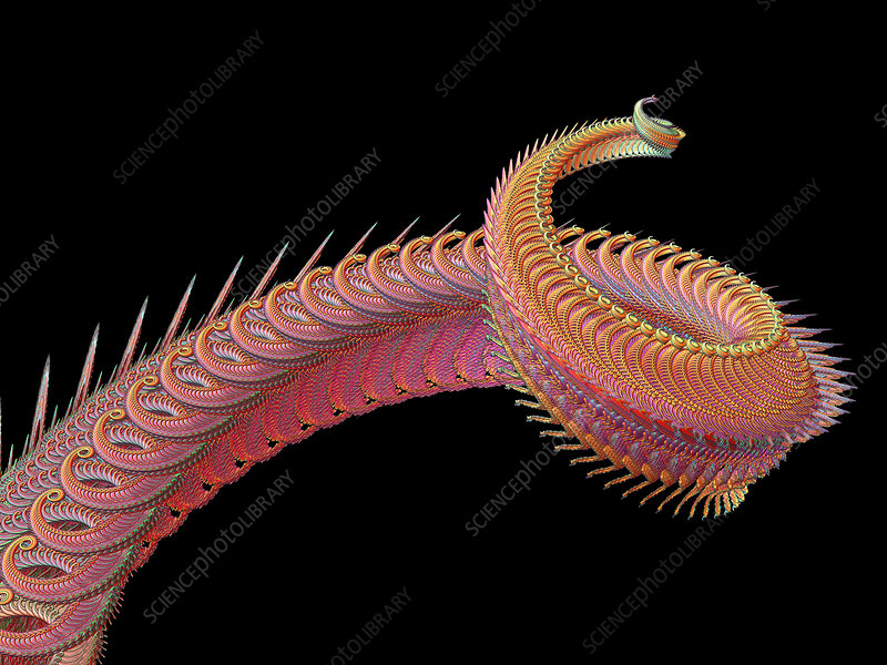 Dragon tail fractal