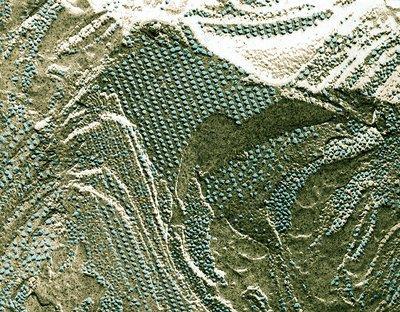Chloroplast membrane, TEM