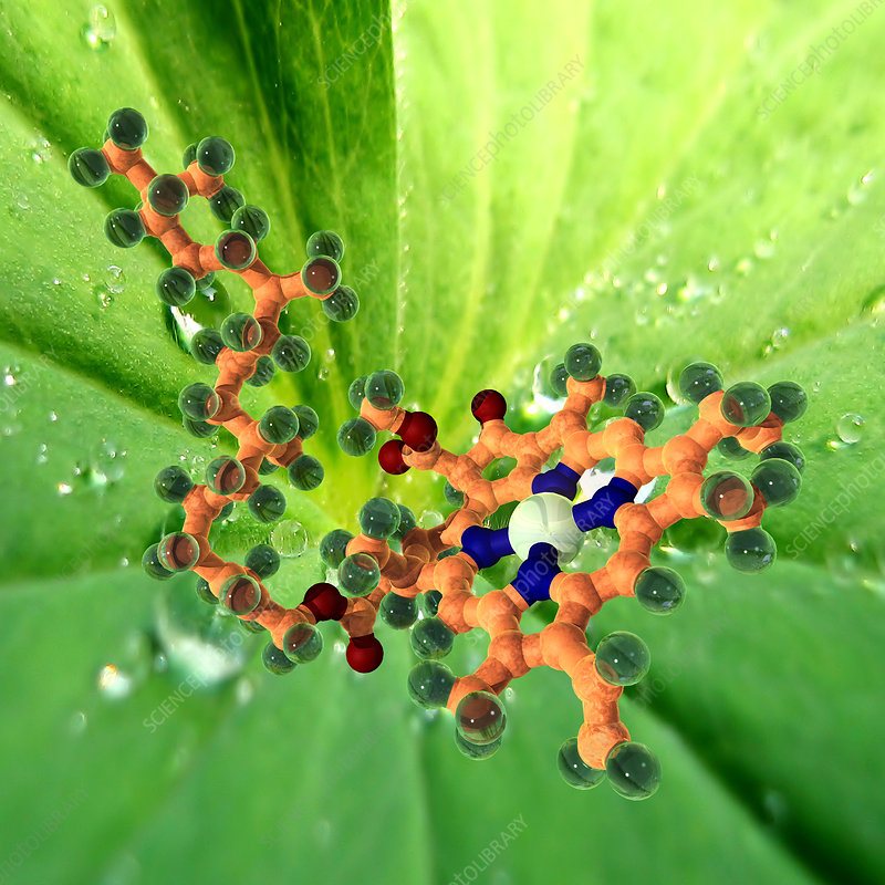 large molecule plants synthesise All forms of life are composed of biomolecules lipid molecules hold a large amount the scaffold for this is provided by the hydrogen bonds within the molecule.