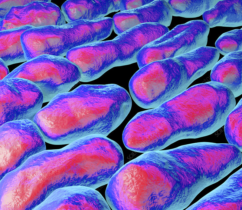 Clostridium bacteria