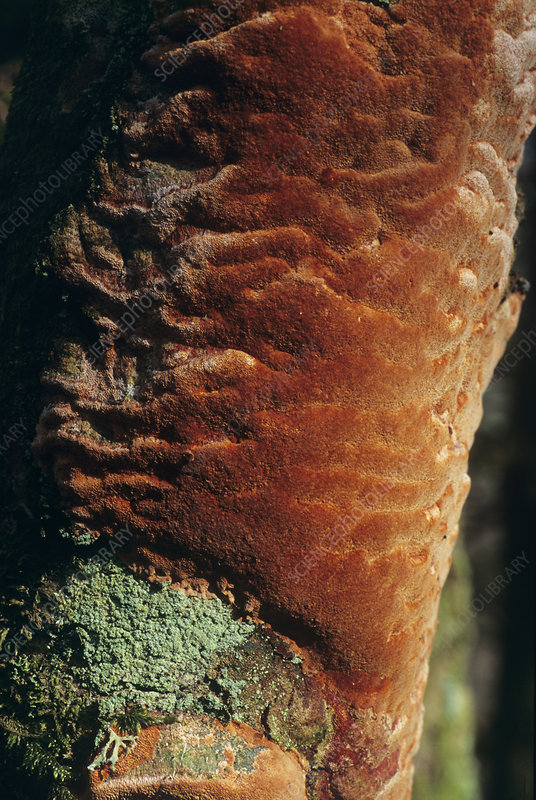 Fungus-clad tree trunk