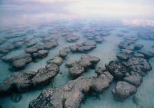 Stromatolite structures of blue-green algae