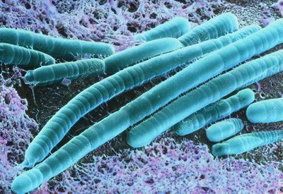 lyngbya bluegreen alga stock image b3070153 science