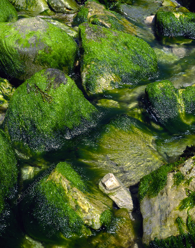Seaweed-covered rocks, Dorset, England