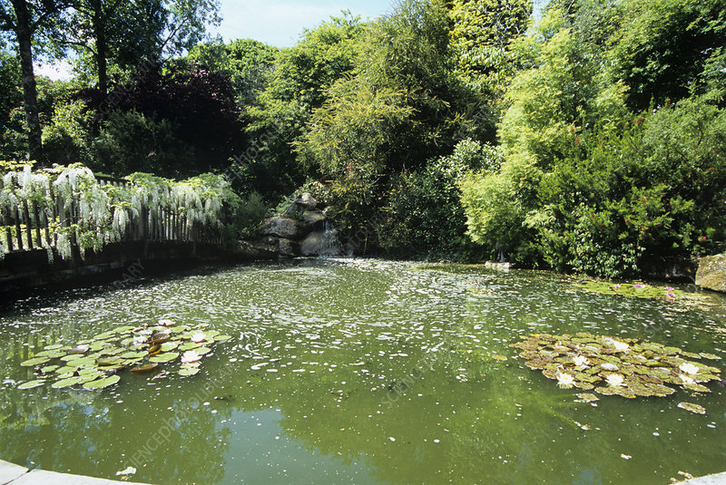 Pond at Pine Lodge Gardens