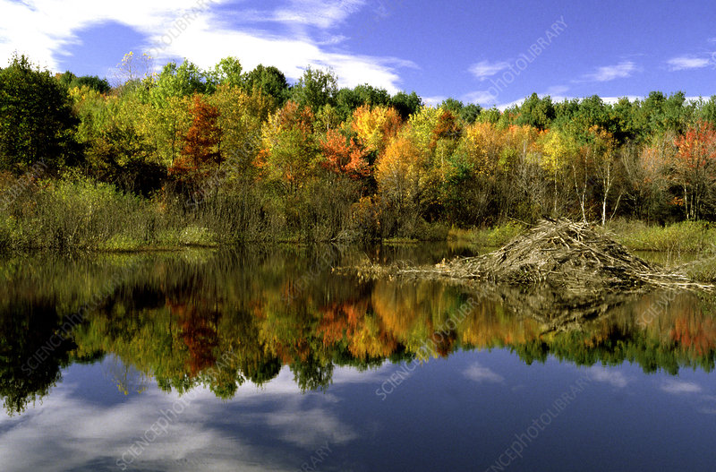 Beaver Pond with fall foliage