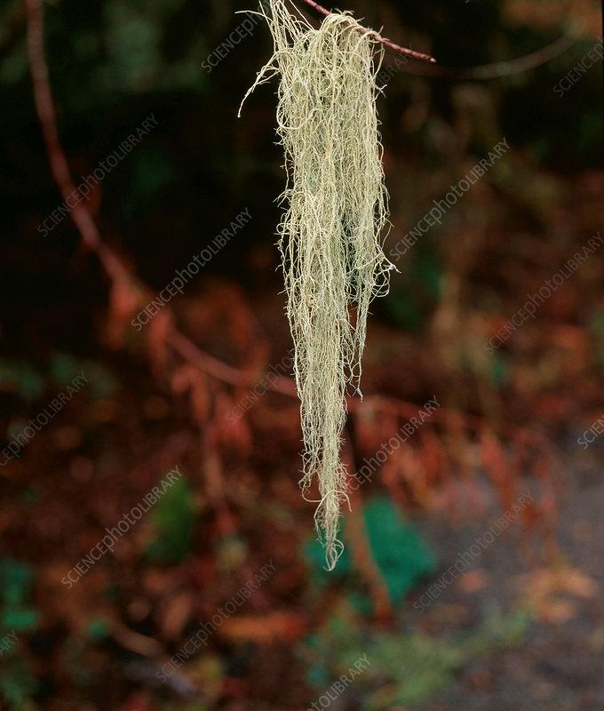 mutualistic relationship fungi and algae mutualism