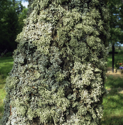 Lichens growing on tree