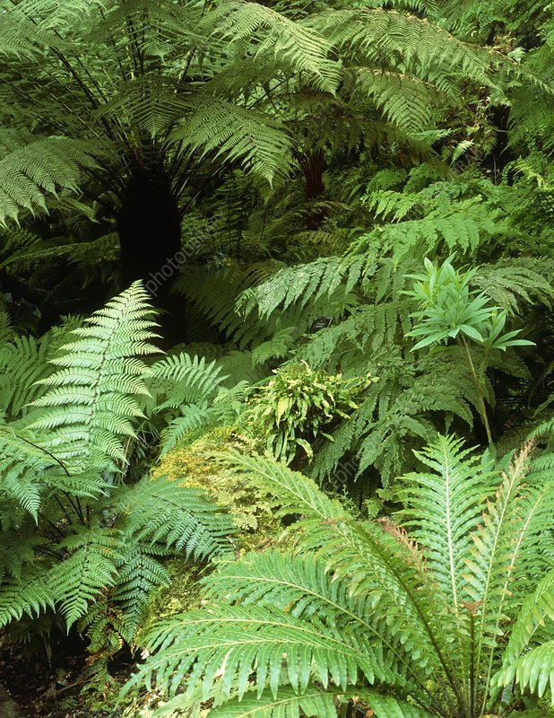 Tree ferns and ferns