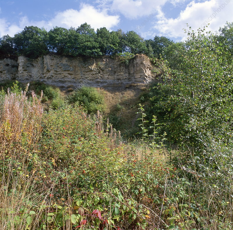 Doulton's Claypit (SSSI)