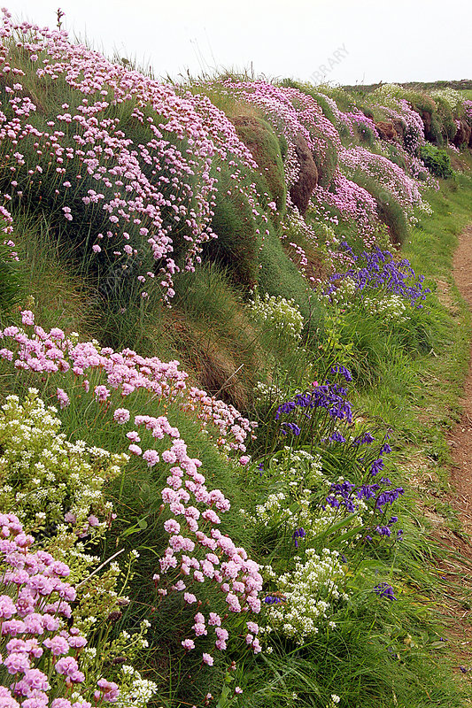Wildflowers along a coastal bank