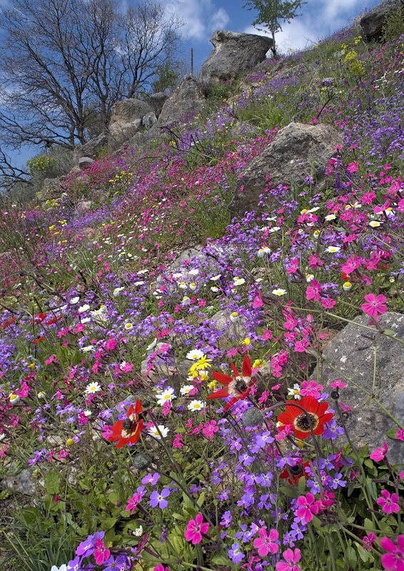 Mediterranean wildflowers