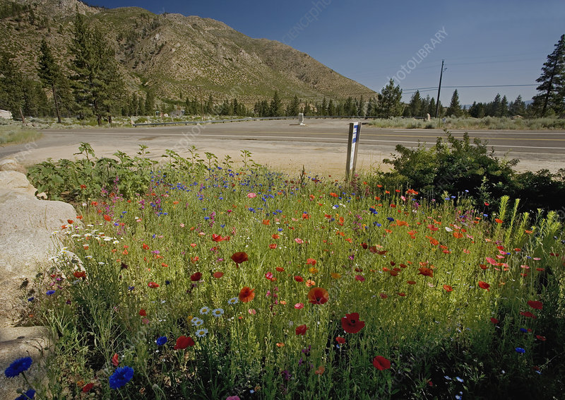 Wildflowers at a roadside
