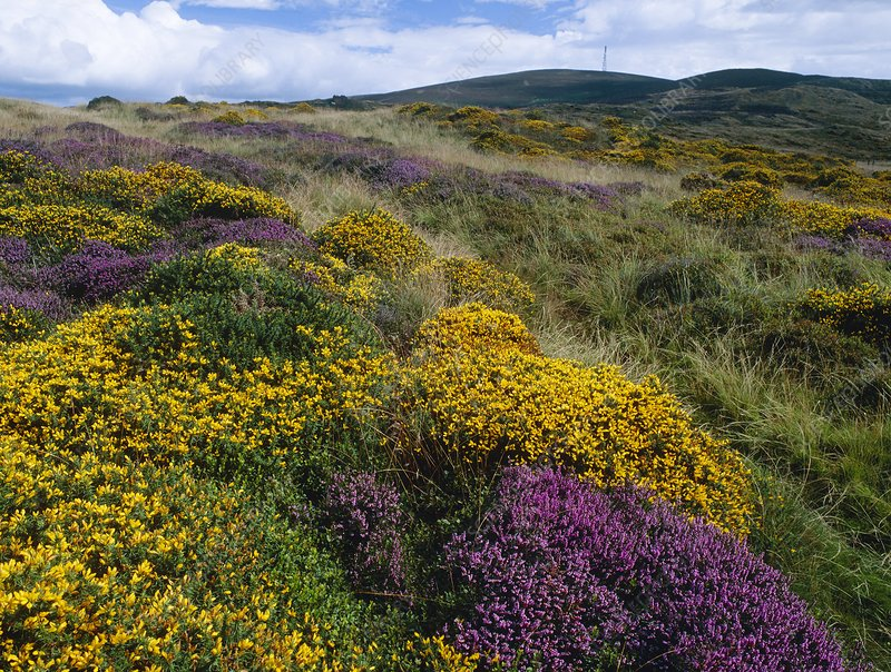Mixed wildflowers on moorland