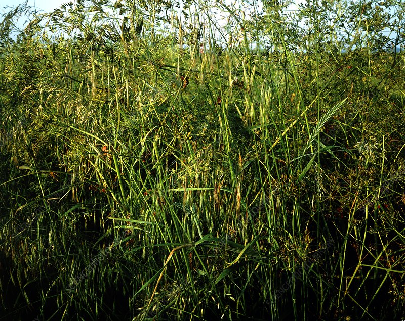 Collection of grasses in a thicket