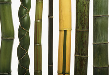 Stems of seven types of bamboo