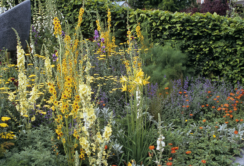 Summer Herbaceous