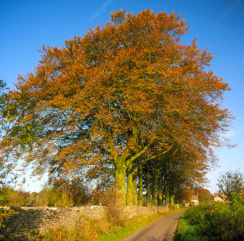 Trees along a country lane in autumn