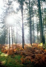 Autumn woodland, New Forest