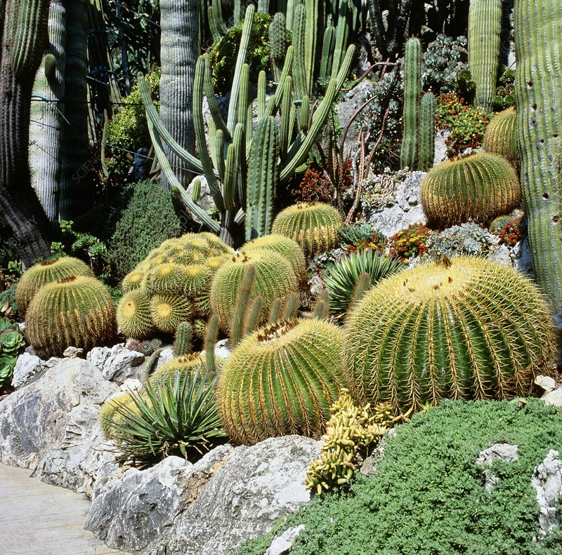 An exotic garden display of cactus plants