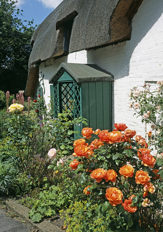 Flowers by a thatched cottage