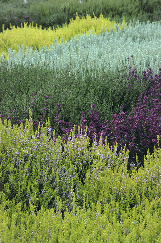 Mixed heather