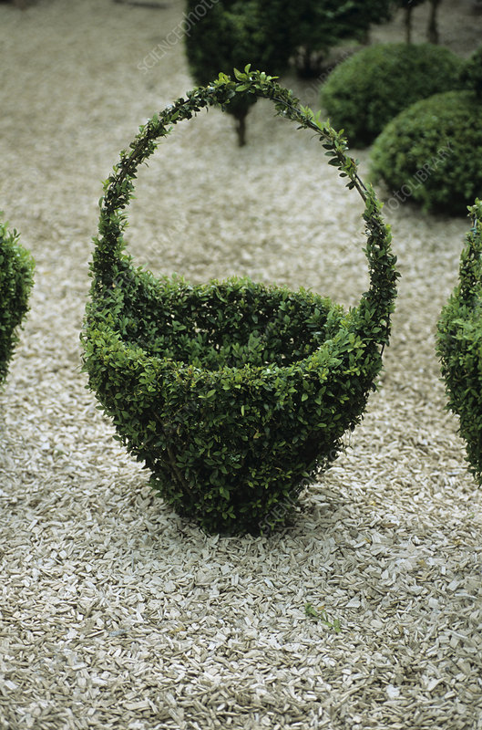 Topiary basket