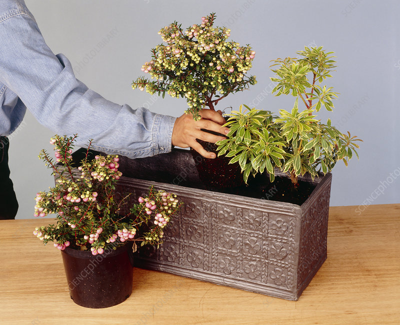 Creating a windowbox
