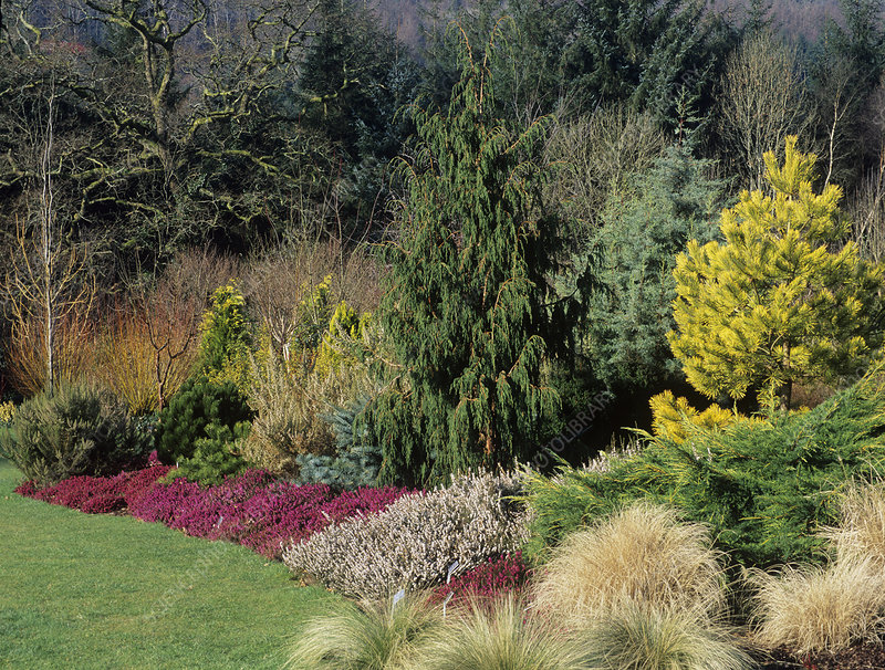 Garden border in winter